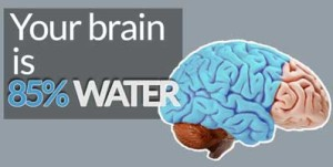 braincompo